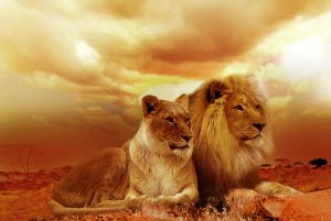 האריות של עורכי הדין בנדלן